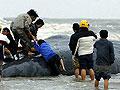 盐城滨海搁浅鲸鱼死亡肉被割