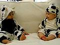 超萌!可爱的奶牛宝宝对视傻笑