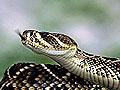焦作校园惊现大蛇救护人员野外放生