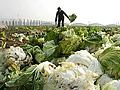 记者走访销售环节探究白菜身价怎样上涨