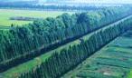 关注森林的综合价值