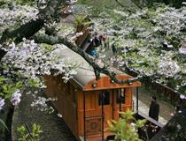 暖春台湾赏花季