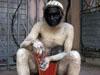 印度雇人扮猴驱猴