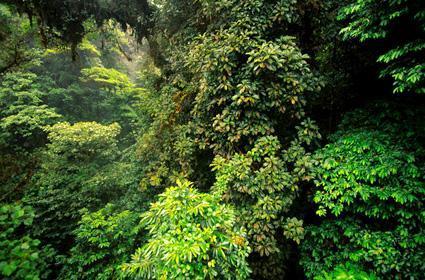 加蒙特维多云雾森林-寻找世界上最美的十大热带雨林