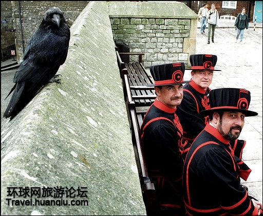皇家宫殿伦敦塔内乌鸦死活关乎英国国运