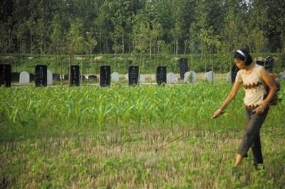 7月11日,河南省商水县,村民在一处公墓边照料农田。