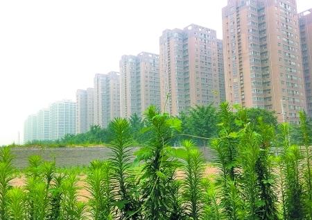 上半年郑州房地产投资增速高于全国 (资料图)
