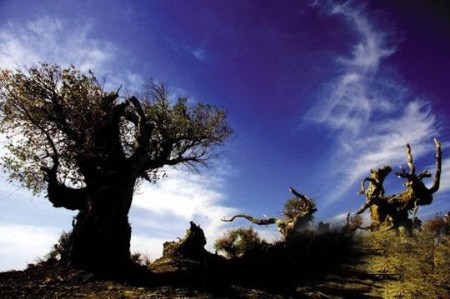 金秋行摄胡杨林 西部最美的原生态长廊