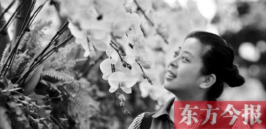 正在郑州绿博园举办的河南·郑州蝴蝶兰展览会,今年升格为国家级展会