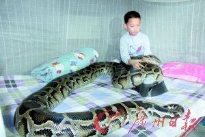阿哲与大蟒蛇和谐共处。