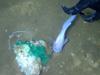 深海发现多种生物