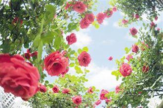 南阳市园林局绿色家园满眼春