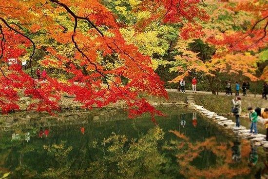 春天的樱花与秋天的枫叶