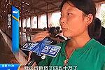 郑州17头奶牛被电死 竟是强拆惹祸