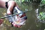 食人鱼剪断木棒