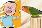 鹦鹉学舌醉男对骂