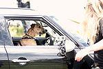 新西兰小狗八周学会开车