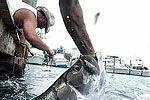 实拍男子徒手钓鱼遭一米大鱼狠咬手臂