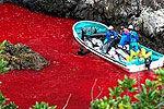 两百多头海豚被逼入日本屠杀海湾