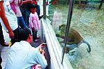 国庆假期游客乱投喂 动物园两只鹿胀死