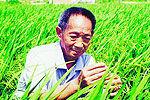 袁隆平领衔超级稻项目亩产破2050斤