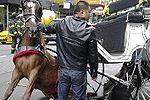 剧组马匹受惊狂奔连撞12名游客致1人死亡
