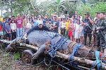全球最大鳄鱼死亡 身长6米曾吃掉一农夫