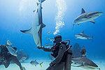 实拍潜水员催眠鲨鱼 使其倒立水中