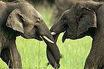 我们结婚吧:讲述大象的爱情