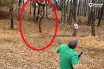 实拍男子对树开枪遭遇现世报被树砸中