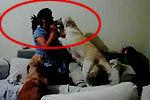 聪明狗狗保护小主人 阻止妈妈打孩子
