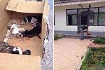 犬类收容所人员当着狗妈妈摔死7只小狗