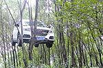 实拍温州越野车溜车上树挂枝头