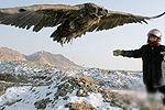 无人机拍下新疆座山雕珍贵活动画面