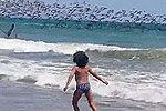 实拍万只鹈鹕俯冲海面觅食壮观景象