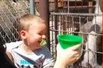 宝贝看妈妈给鸵鸟喂食笑到停不下来