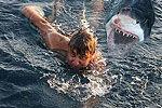 澳洲男子被鲨鱼咬死 妻子目睹全程