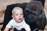 英女子与大猩猩分别12年重逢 深情相拥