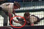 实拍动物训练师表演中遭鳄鱼咬臂