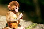 实拍小猕猴闯进火锅店好心人送进动物园