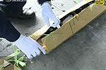 货柜车内藏纸蛇腹吞千台手机闯关被截获