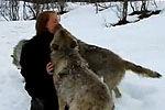 四匹狼亲吻一女士
