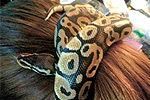 恶搞:当妹子们发现身后跟着一条蛇