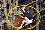 长发站街女拉客遇警察爬树对峙 原是男子
