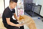 深圳版忠犬八公车站痴等主人走失半年回家