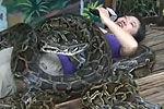 实拍女记者体验4条巨型缅甸蟒蛇压身按摩