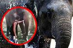 作死男挑逗大象被一鼻子抽飞 晕倒在地