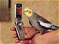 迷路鹦鹉向警察自报住址被送回家